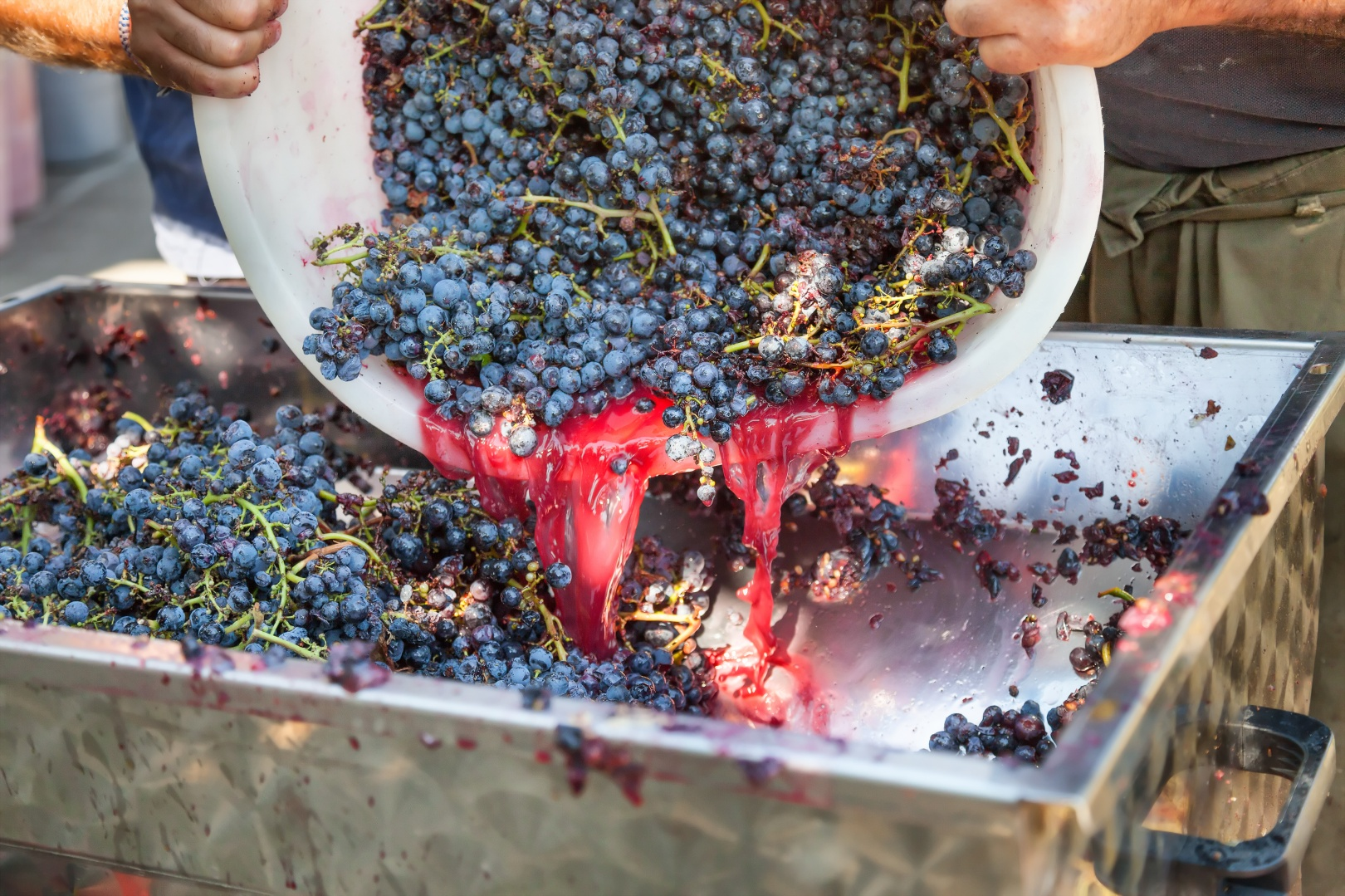 Organic wine production